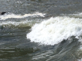 River Surf Report Screenshot